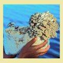 maitake-mushroom-growing-kit-wheatgrass-kits