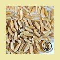 wheat-kamut-seed-wheatgrass-kits
