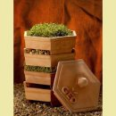sprouter-terra-cotta-wheatgrass-kits