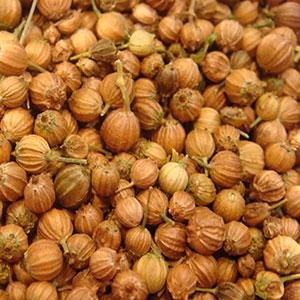 herbal-stimulants-coriander-seed