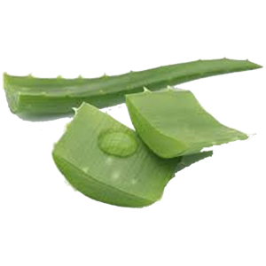 aloe-leaf-2-nature-earth