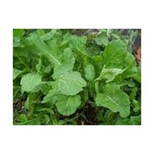 arugula-seeds-bulk-amazon