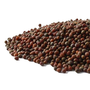 broccoli-seed-mountain-rose-herbs