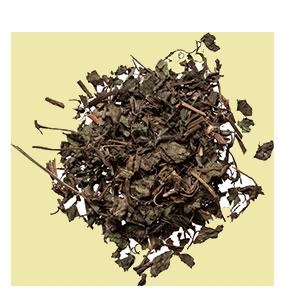 gynostemma-plum-dragon-herbs