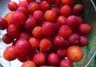 madrone-berries-related-pages