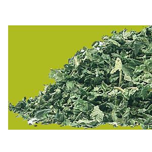 nettle-leaf-mrherbs