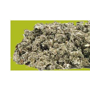 raspberry-leaf-mrh