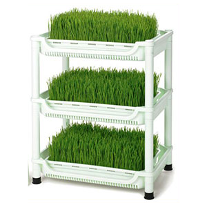 wheatgrass-grower-sproutman