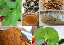 ayurvedic-herbs-related-pages