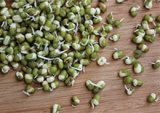 mung-bean-sprouts-page