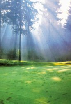 what-is-spirulina-sunlight-on-pond