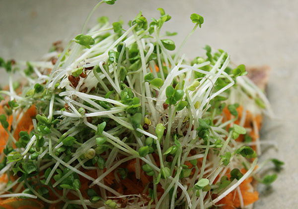super-sprouts-home-page