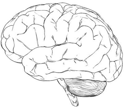 gotu-kola-benefits-brain-tonic