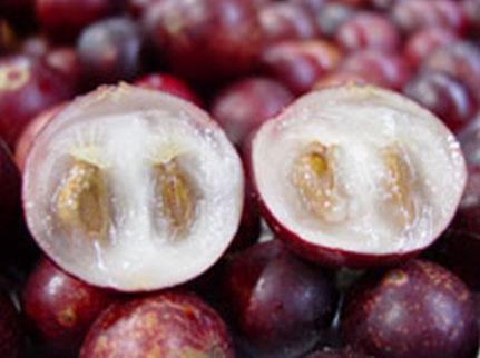 myrciaria-dubia-berry