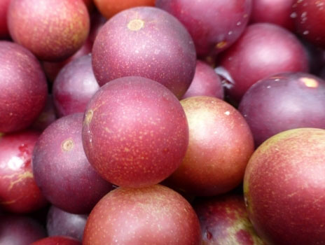 what-is-camu-camu-fruit