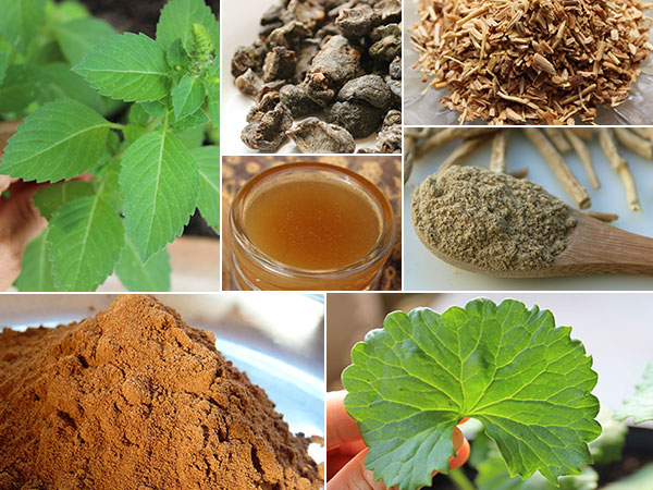 ayurvedic-herbs-list-collage-pics