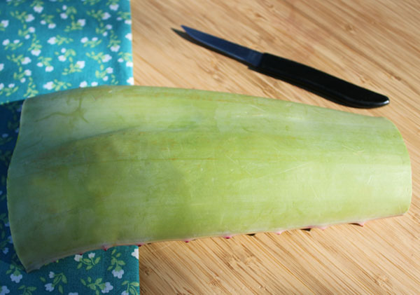 how-to-fillet-aloe-1