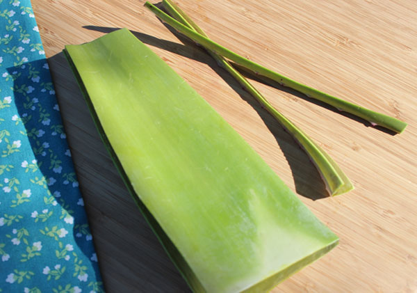 how-to-fillet-aloe-2