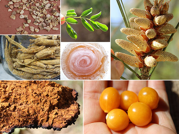 more-top-superfoods-list