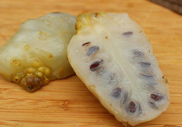 noni-fruit-freshly-harvested