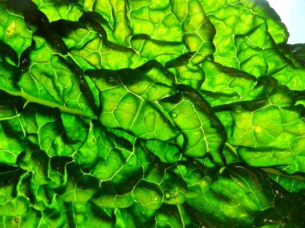 chlorophyll-benefits-green-leafy-vegetables