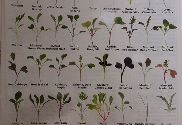 what-are-microgreens-seed-varieties