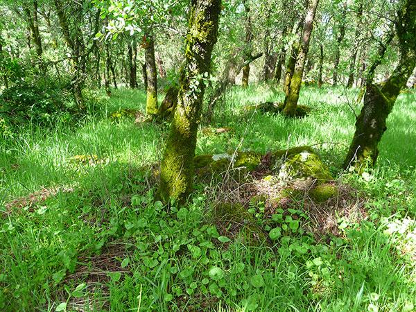 edible-wild-plants-rewilding
