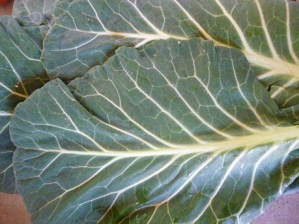 raw-vegan-diet-green-leafy-vegetables