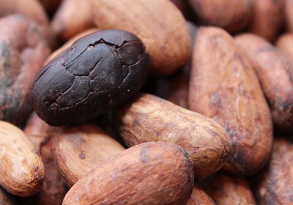 cacao-beans-benefits-antioxidants