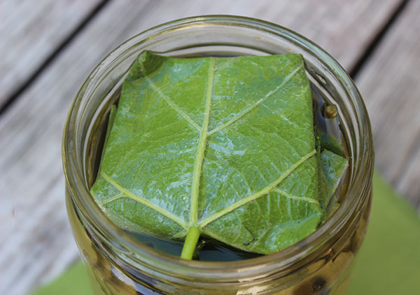 fermented-grape-leaves-top-leaf-layer