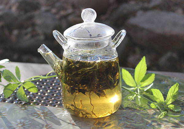 gynostemma-tea-benefits-tea-infusion
