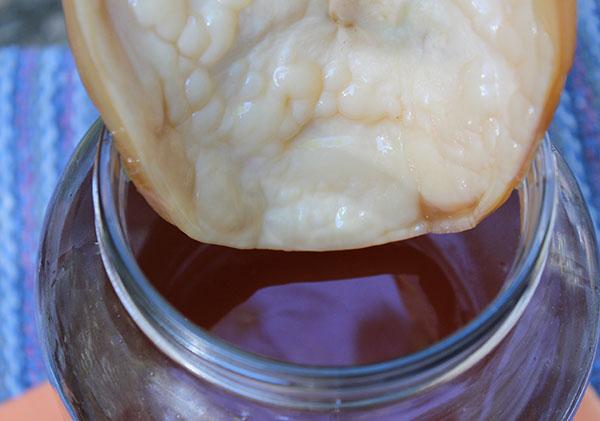 kombucha-scoby-in-tea-jar