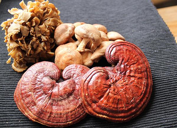 medicinal-mushrooms-benefits-beta-glucans