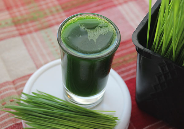 what-is-wheatgrass-good-for