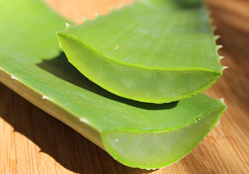 Aloe vera benefits as a nutritious dietary superfood for Aloe barbadensis