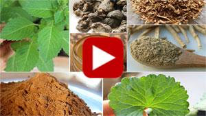 ayurvedic-herbs-vid