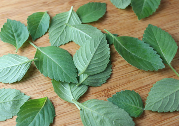 benefits-of-holy-basil-tusli-leaves
