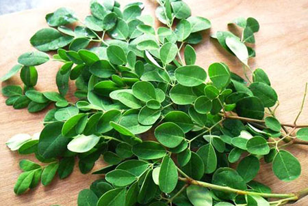benefits-of-moringa-fresh-harvest