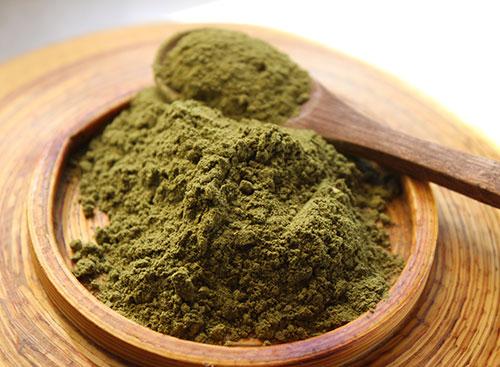 benefícios-de-moringa-plant