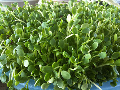 benefits-of-sprouts-cl-sprouts