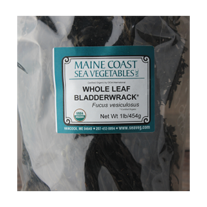 bladderwrack-dried-whole-maine-coast-sea-vegetables