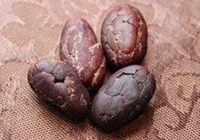 cacao-beans-related-pages