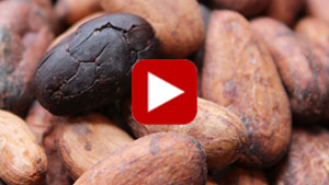 cacao-beans-vid