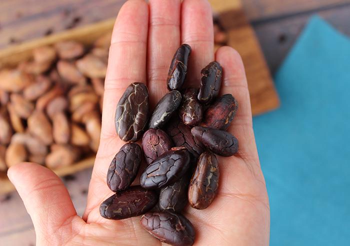 cacao-beans-vs-cocoa