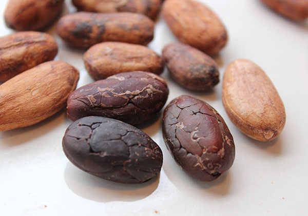cacao-recipes-cacao-beans