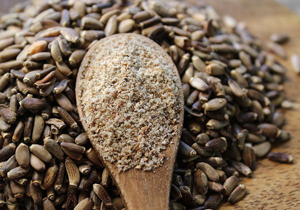 cleansing-herbs-milk-thistle-seeds