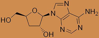 cordyceps-benefits-cordycepin
