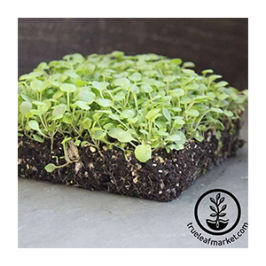 cress-sprouting-seeds-true-upland