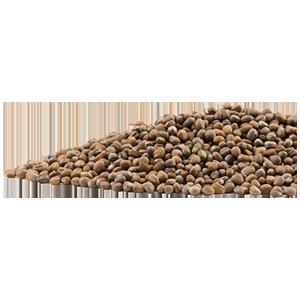 daikon-seeds-mrh