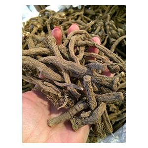 dandelion-root-bio-herbs